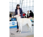 2*CAC National Dog Show 20.01.2019 г.